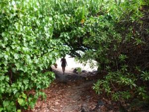 had to walk through a tree tunnel