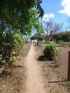 walk down a long path