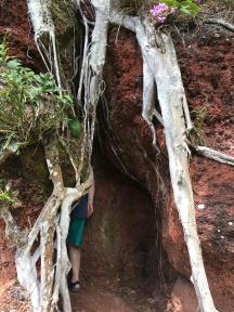 You go through the tree to begin the trek
